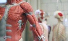 Curso de Anatomofisiologia – Noções Básicas
